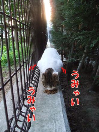 2011_03310082.jpg
