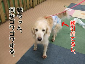2011_04040012.jpg