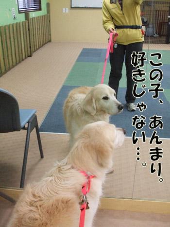 2011_04040019.jpg