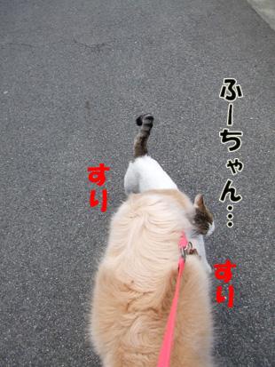2011_04060028.jpg