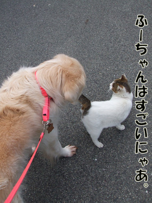 2011_04060029.jpg