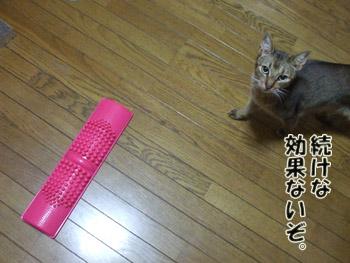2011_04110054.jpg