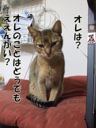 2011_04190014_20110501081909.jpg