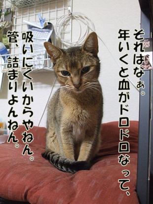2011_04190014_20110628131603.jpg
