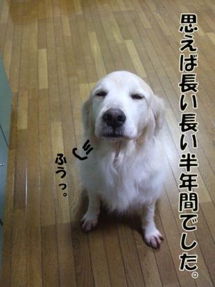 2011_04260026.jpg