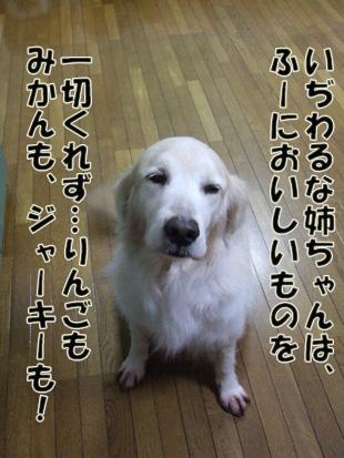2011_04260029.jpg