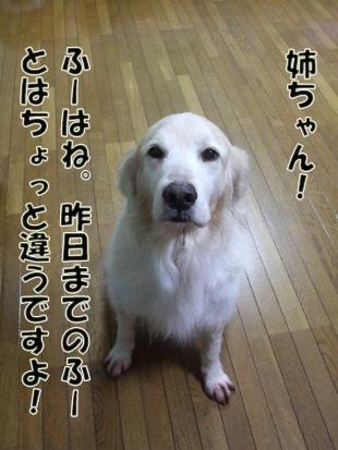 2011_04260032.jpg