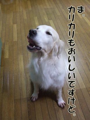 2011_04260034.jpg