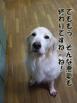 2011_04260037.jpg