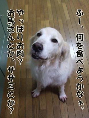 2011_04260040.jpg
