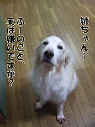 2011_04260044.jpg