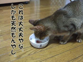 2011_05020007.jpg
