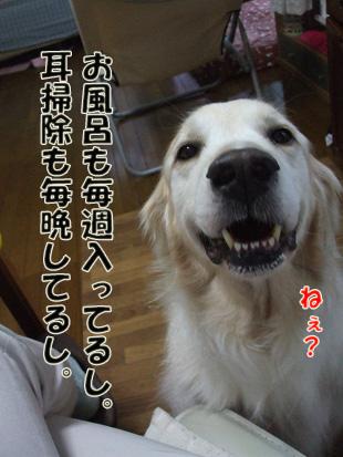 2011_05150025.jpg