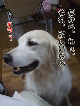 2011_05150027.jpg