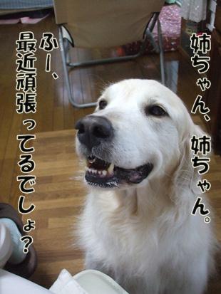 2011_05150041.jpg