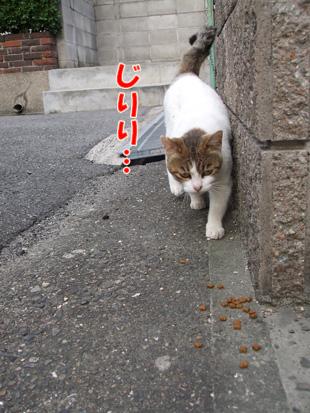 2011_05160027.jpg