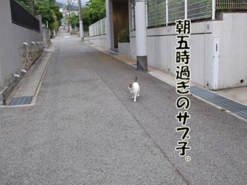 2011_05210016.jpg