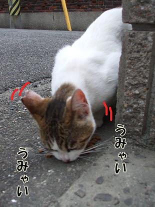 2011_05210022.jpg