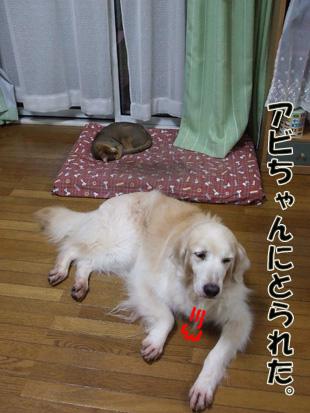 2011_05210049.jpg