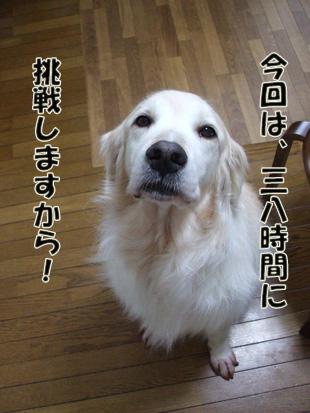 2011_05280013.jpg