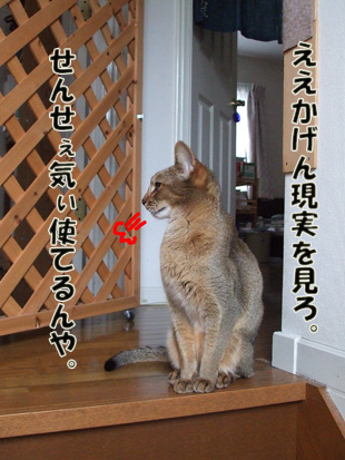 2011_05280036a.jpg