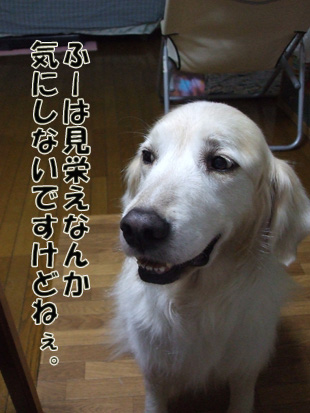 2011_05290013.jpg