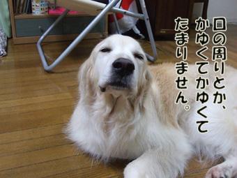 2011_06070027.jpg