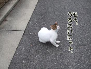 2011_06100009.jpg