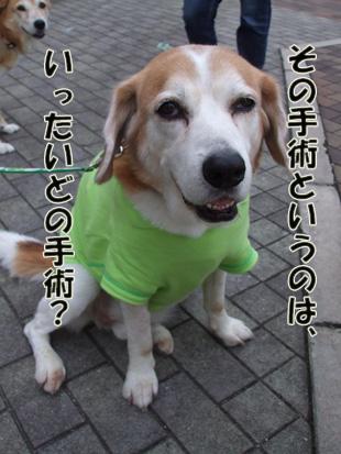 2011_06120014.jpg
