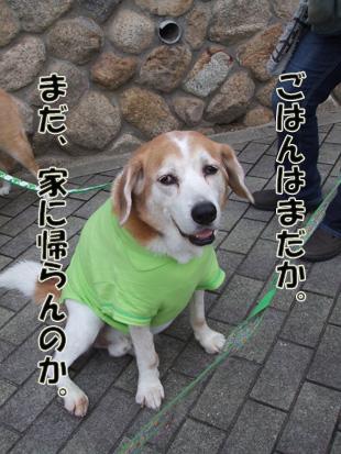 2011_06120037.jpg