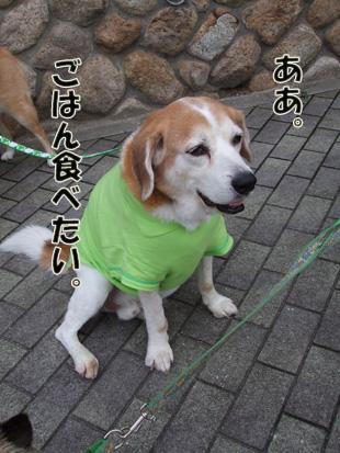 2011_06120038.jpg