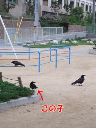 2011_07060001.jpg