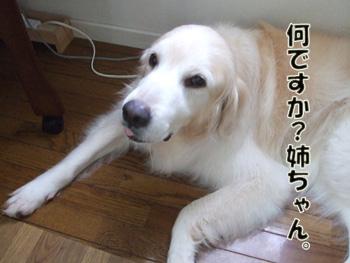 2011_07100064.jpg