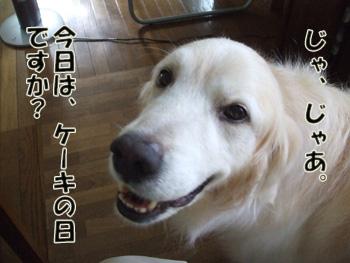 2011_07100067.jpg