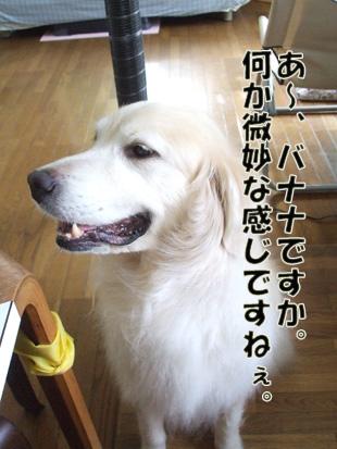 2011_07100068.jpg