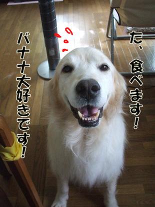2011_07100072.jpg