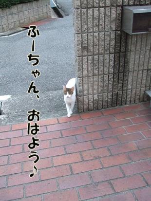 2011_07150006.jpg