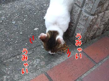 2011_07150012.jpg