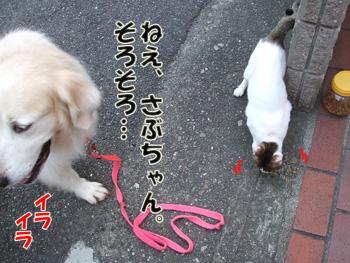 2011_07150023.jpg