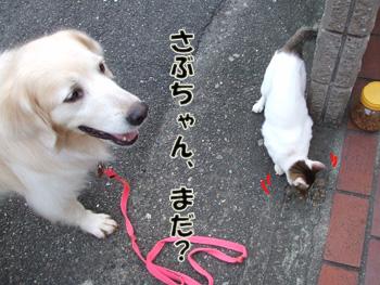 2011_07150024.jpg