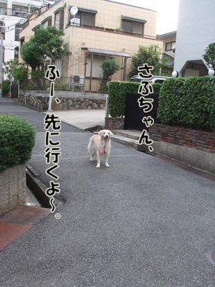 2011_07150026.jpg