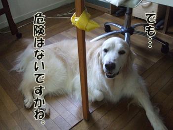 2011_07170016.jpg