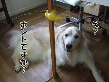 2011_07170017.jpg