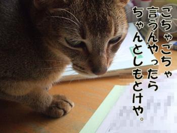 2011_07190036.jpg
