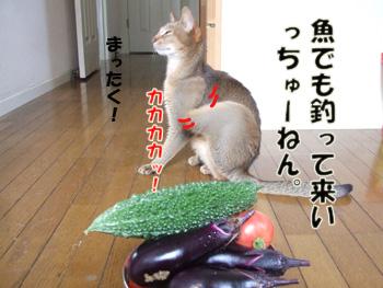 2011_07240021.jpg