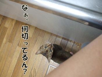 2011_07240033.jpg
