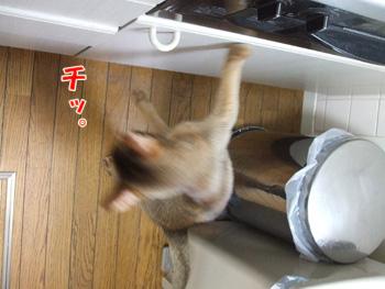 2011_07240035.jpg