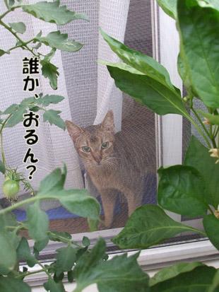 2011_07290002.jpg