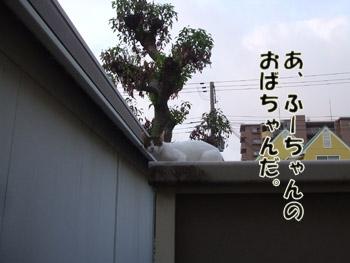 2011_07290032.jpg