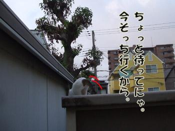 2011_07290033.jpg